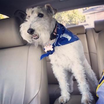 berkley car ride